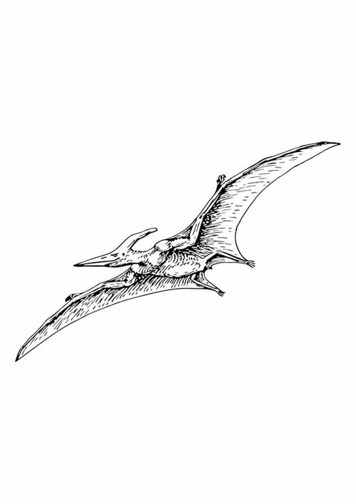 dinossauro para colorir pterodáctilo