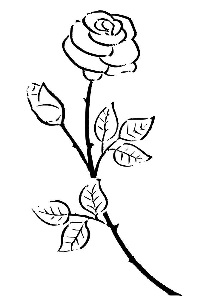 dois botões de rosas para colorir