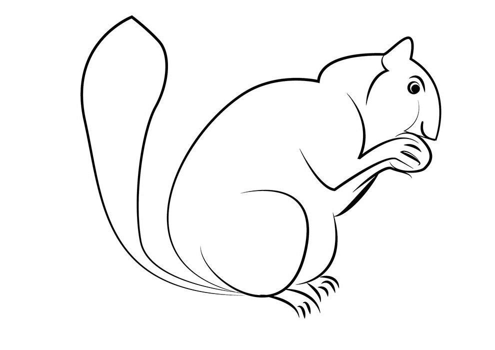 esquilo para colorir