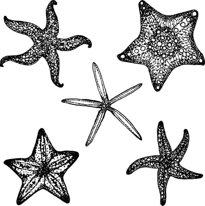 estrelas do mar para imprimir