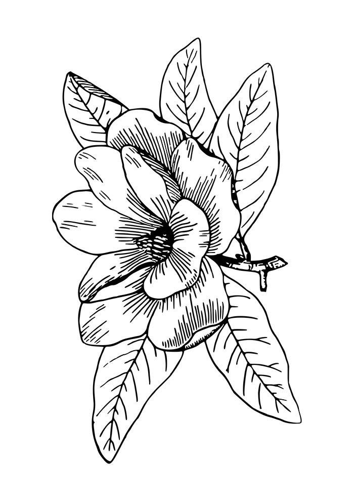 flor com folhas para colorir