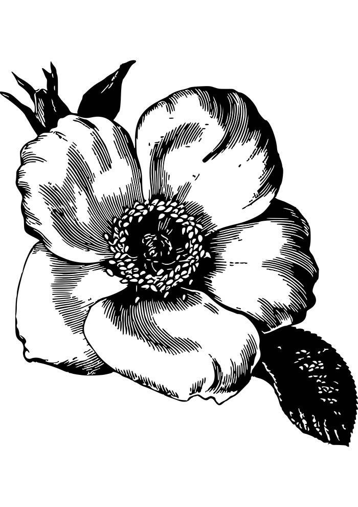 flor grande para colorir