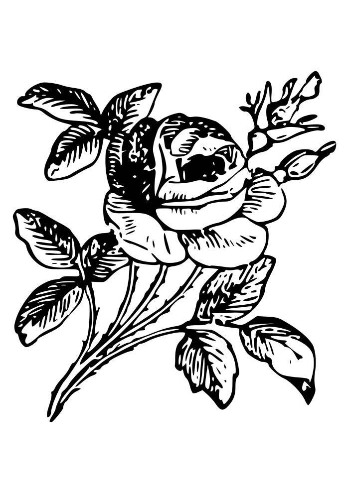 flores com rosa para colorir