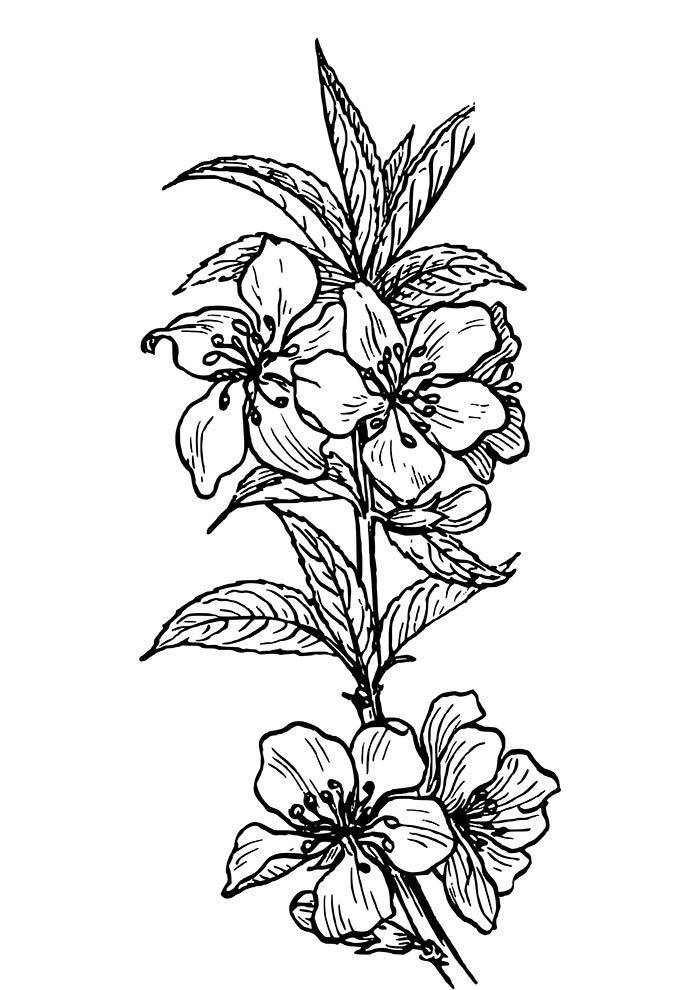 flores e pétalas para colorir