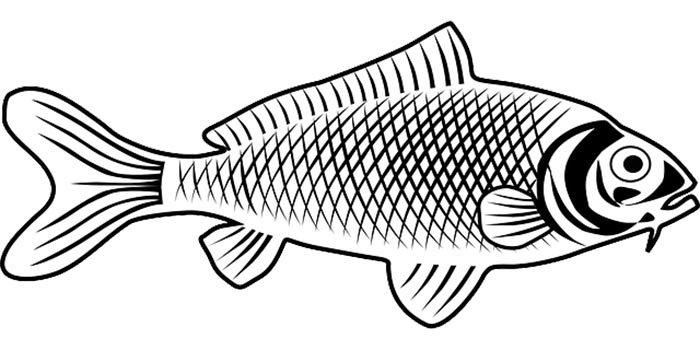 Foto de peixe para colorir