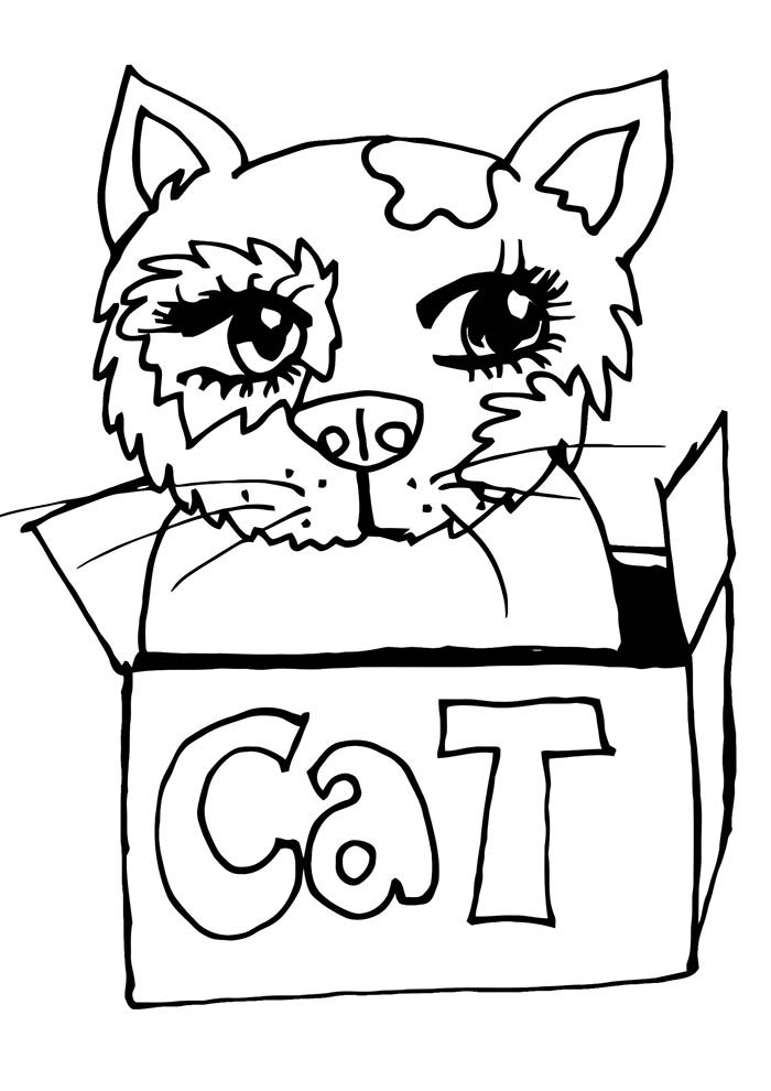 gata na caixa para colorir