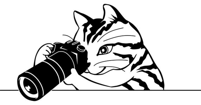 Gato fotógrafo para colorir