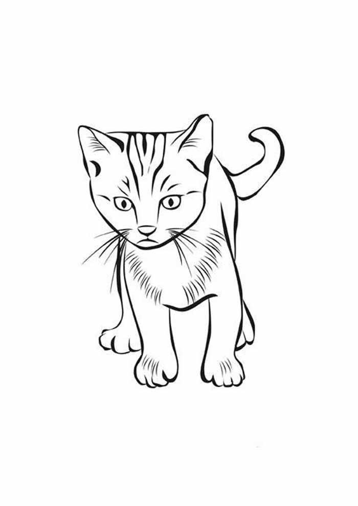 gato para colorir assustado