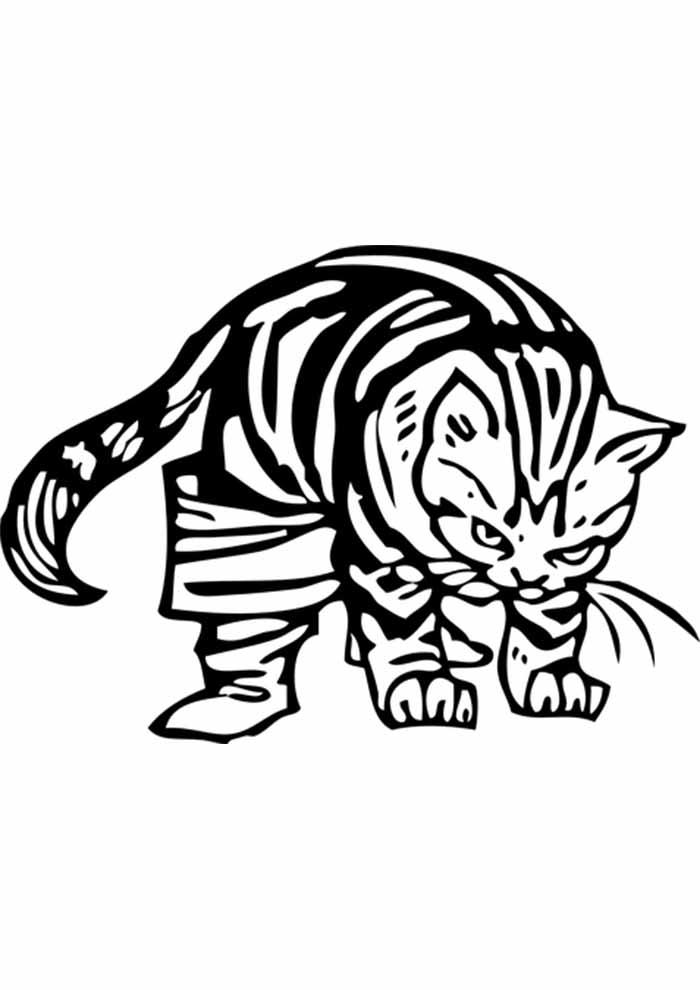 gato para colorir bravo