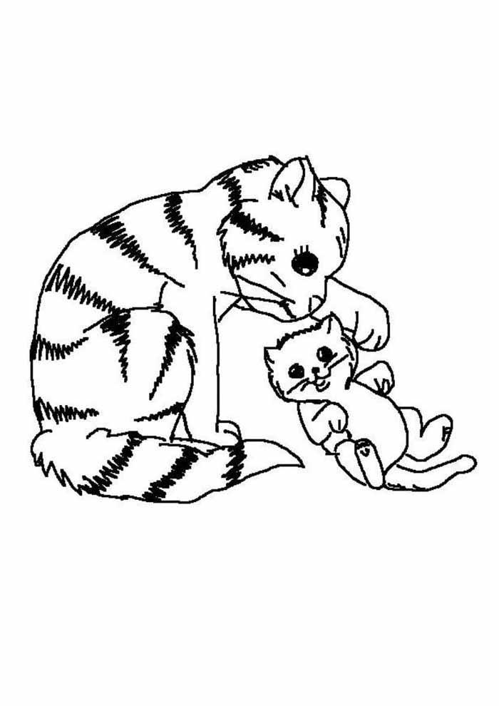 gato para colorir com filhote