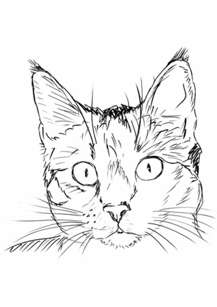 gato para colorir desenho realista