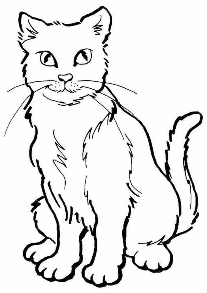gato para colorir elegante