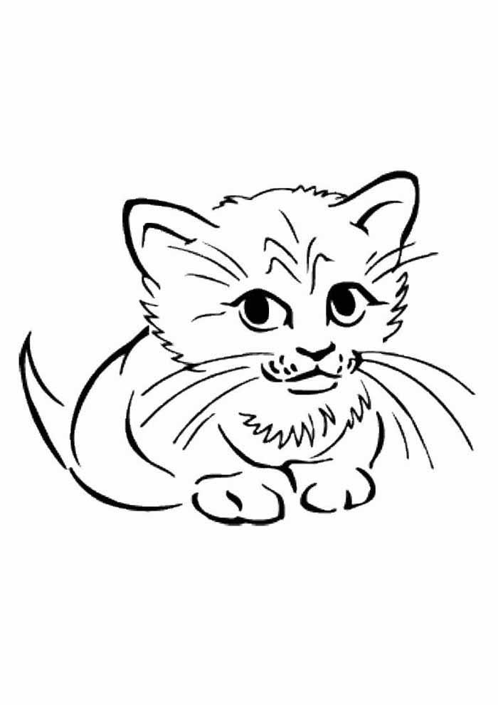 gato para colorir fofo