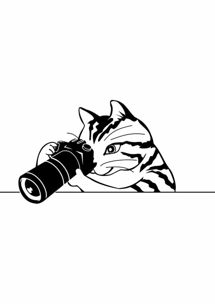 gato para colorir fotógrafo