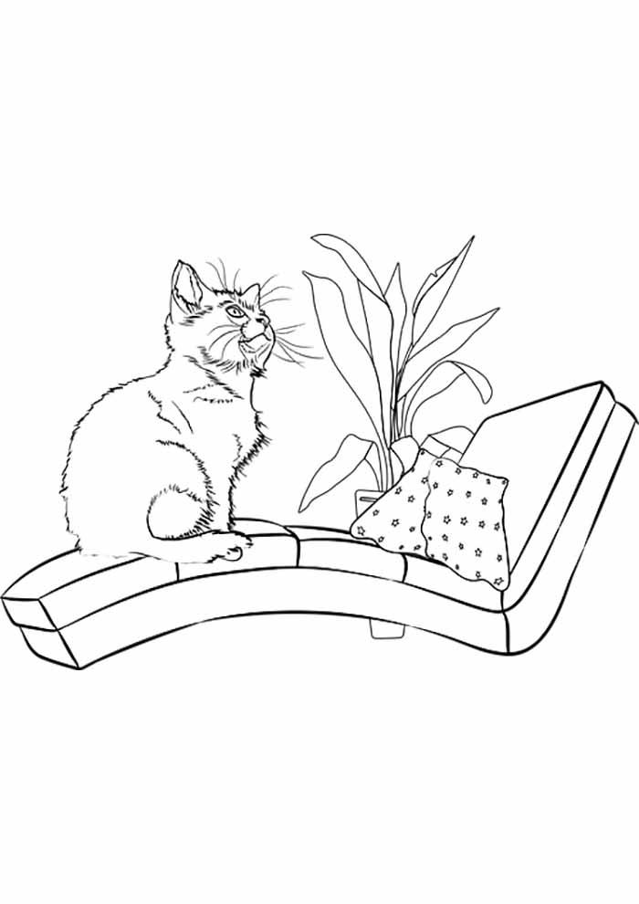 gato para colorir sentado no divã