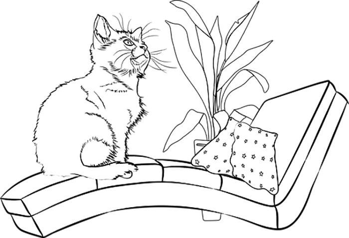 Gato sentado para colorir
