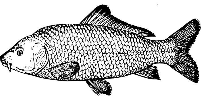 Grande peixe para colorir