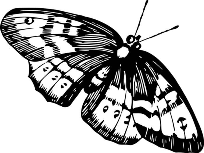 Gravura de borboleta para colorir