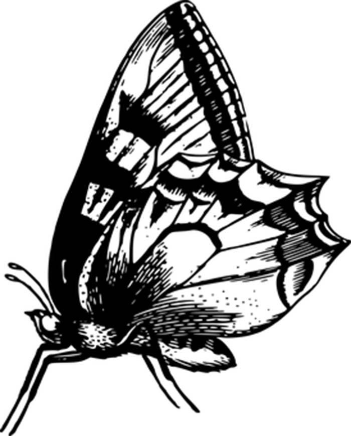 Imagem de borboleta para pintar