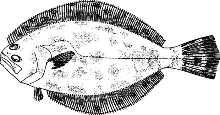 Imagem de peixe para imprimir