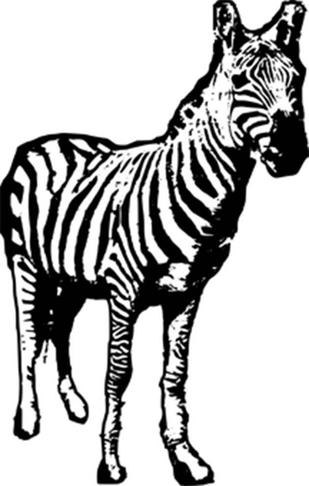 Imagem de zebra para colorir