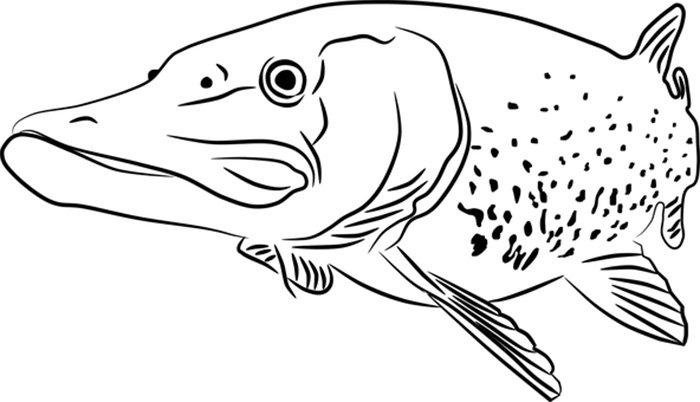 Imagem peixe imprimir