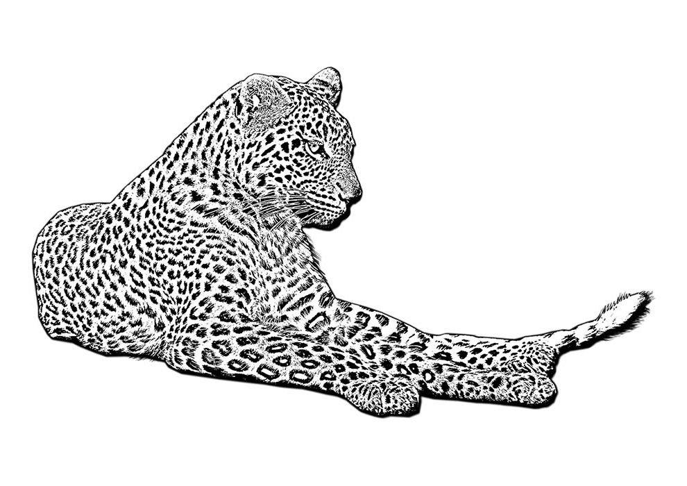 leopardo para colorir