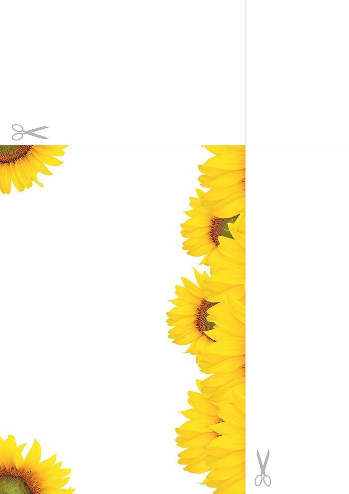 Papel de carta girasol