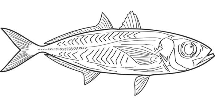 Peixe comprido para colorir