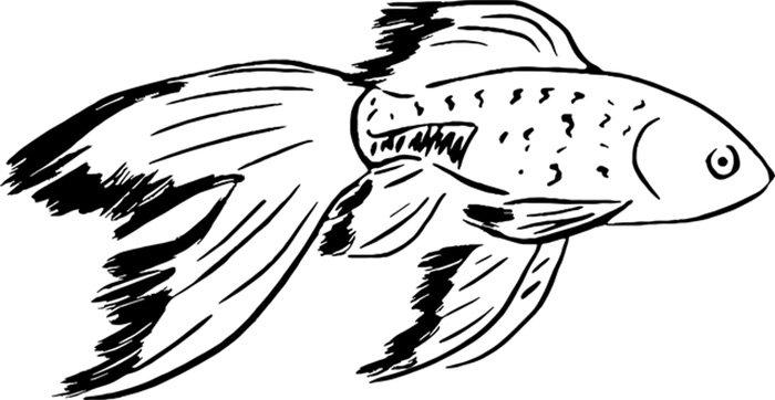 Peixe dourado para colorir