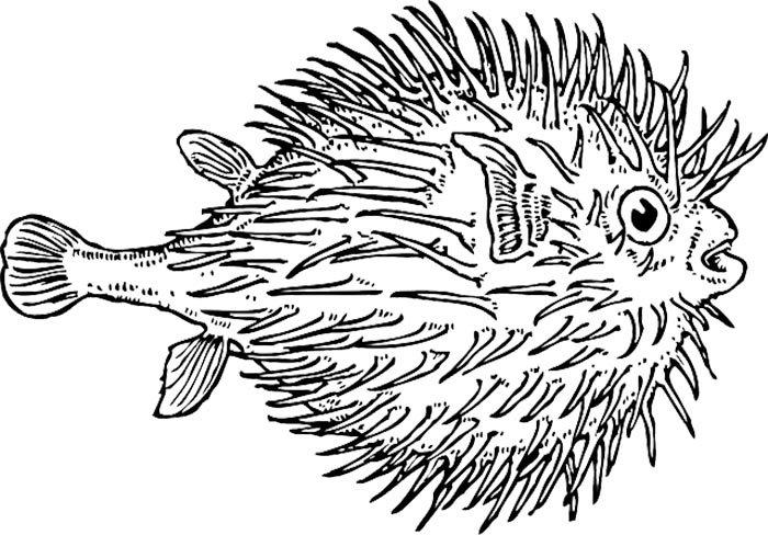 Peixe espinho para colorir