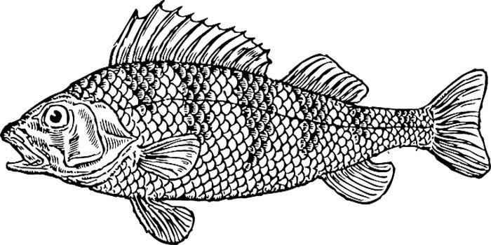 Peixe para imprimir e colorir