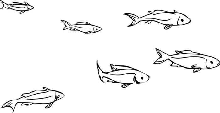 Peixes pequenos para colorir