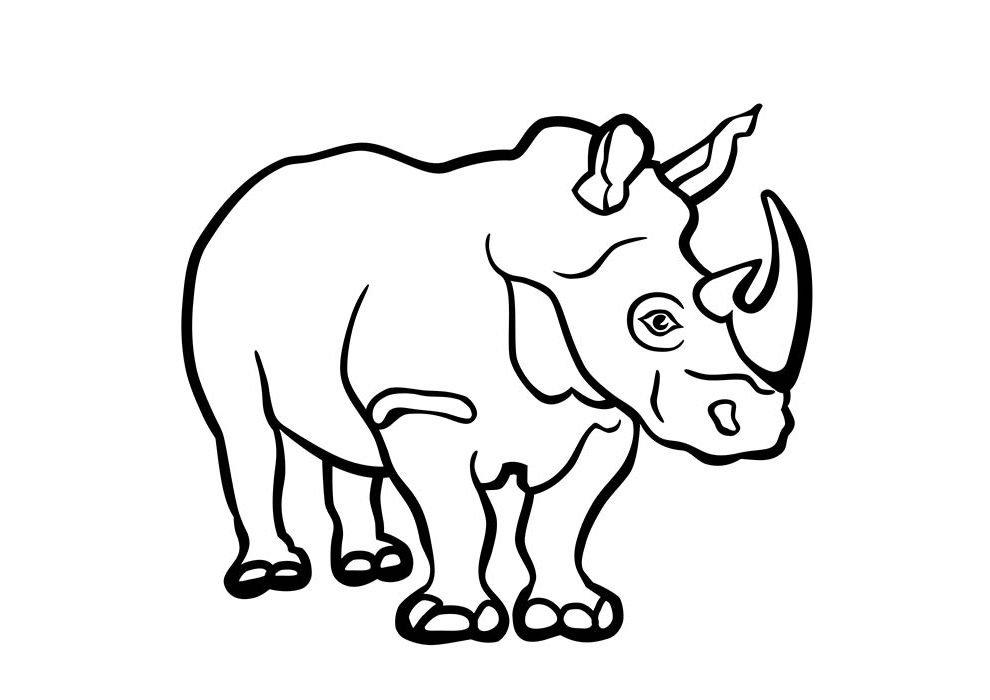 rinoceronte para colorir