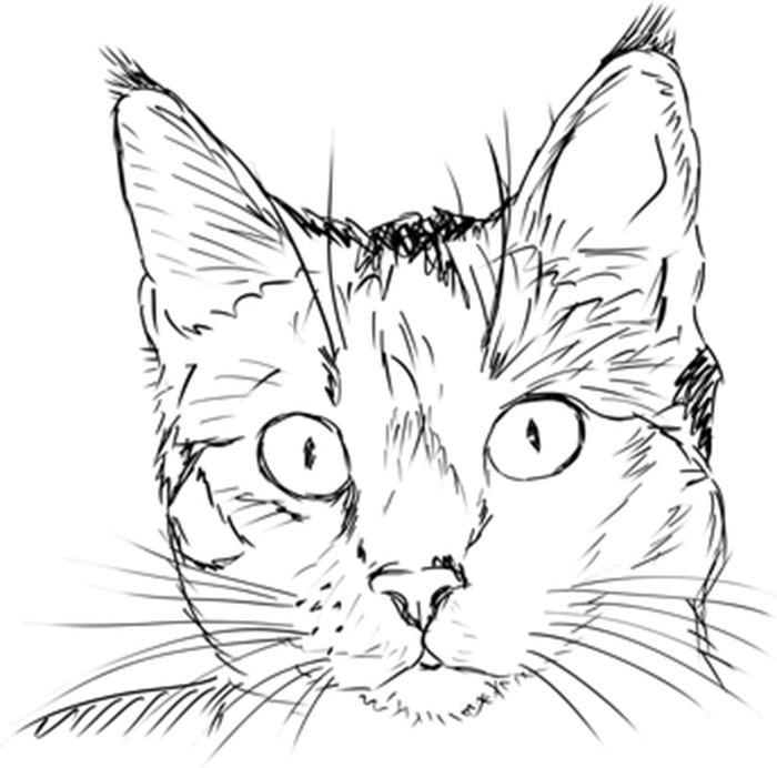 Rosto gato para colorir
