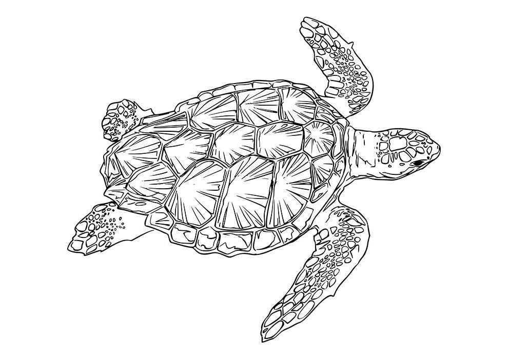 tartaruga para colorir