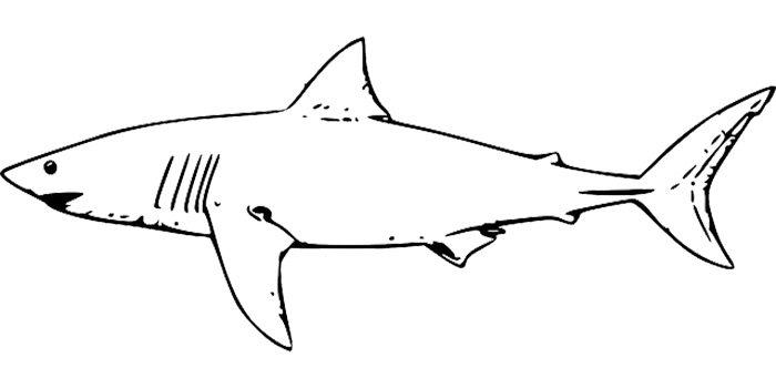 Tubarão para imprimir e colorir
