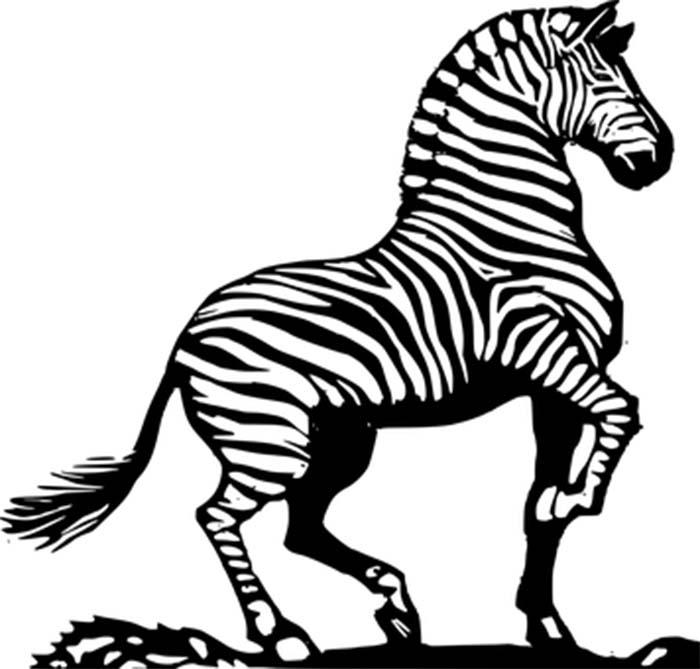 Zebra desenho para colorir