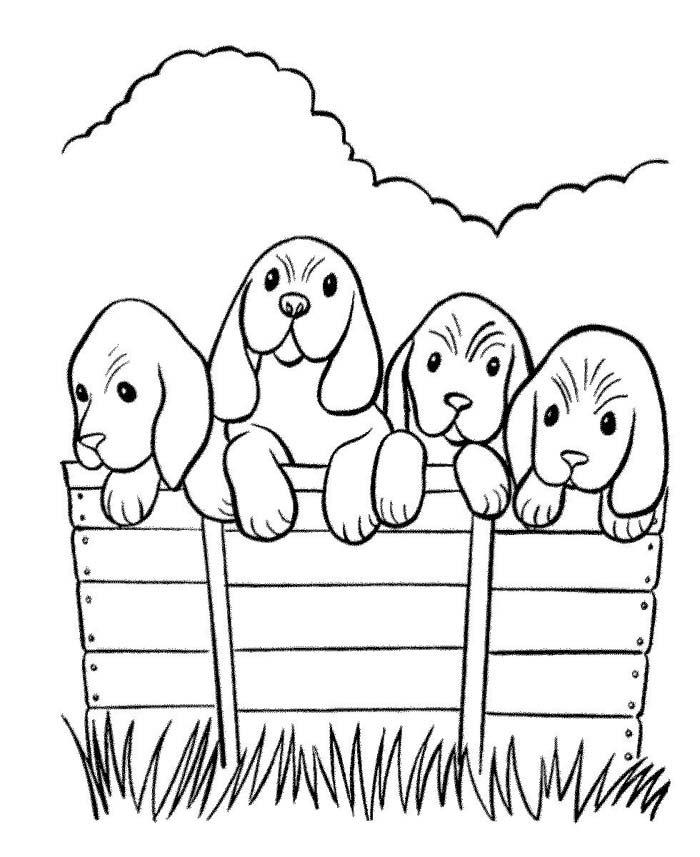 cachorrinhos na cerca
