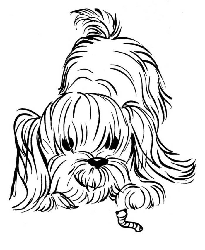 cachorro brincando com a minhoca