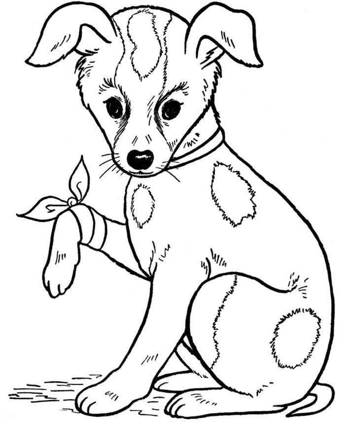 cachorro com a pata machucada