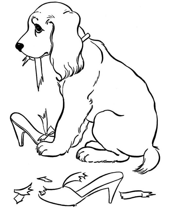 cachorro comeu sapatos
