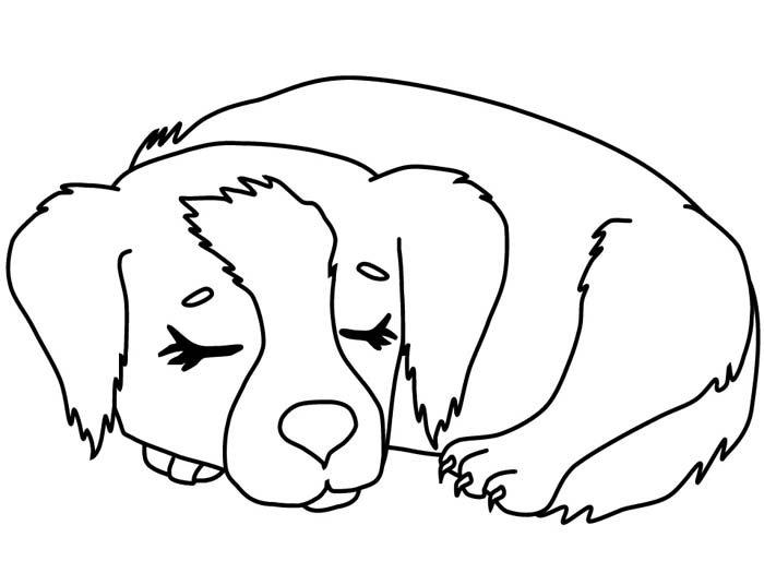 cachorro dormindo