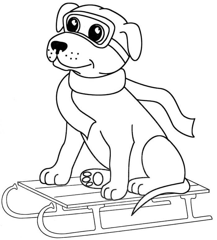 cachorro esquiando