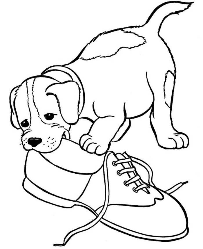 cachorro mordendo sapato