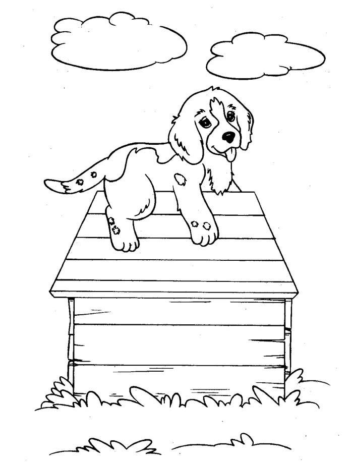 cachorro no telhado