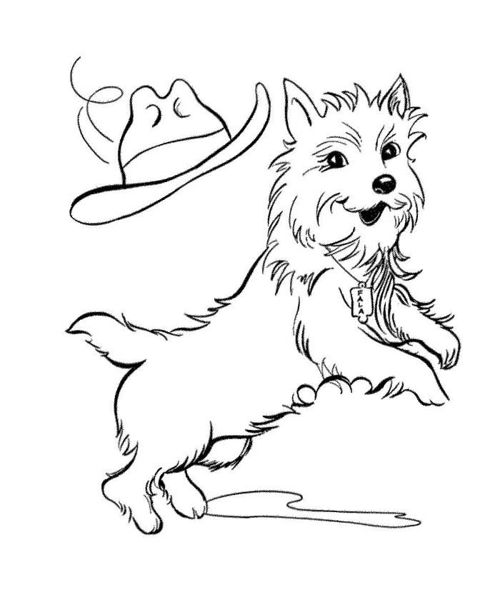 cachorro pulando