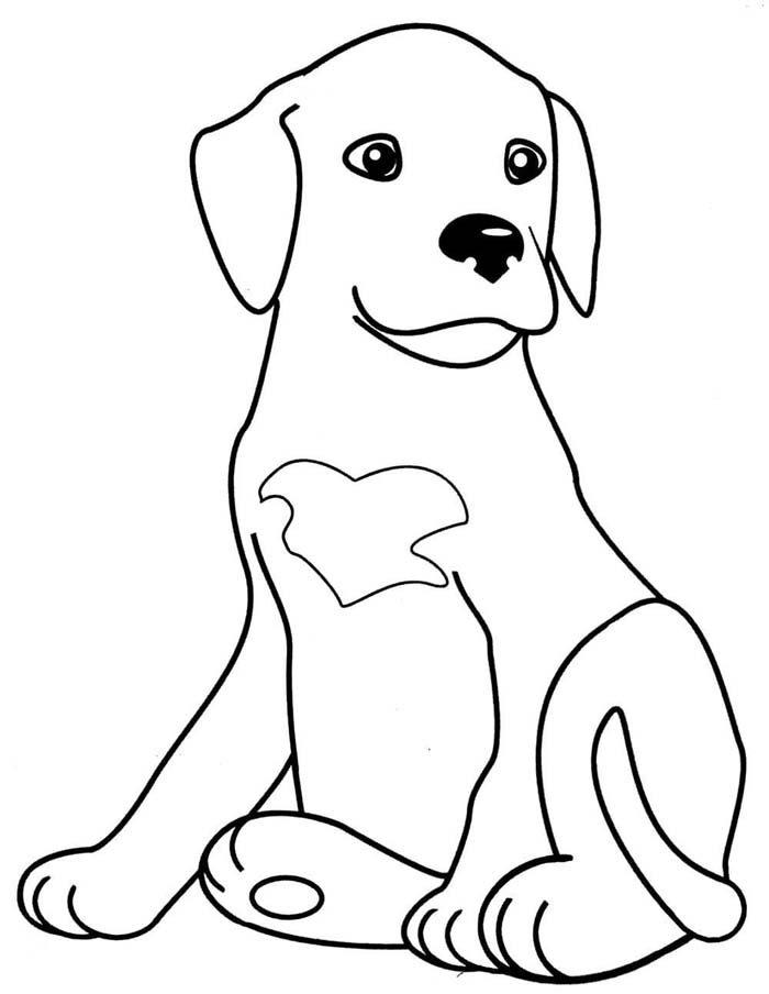 cachorro sentando olhando