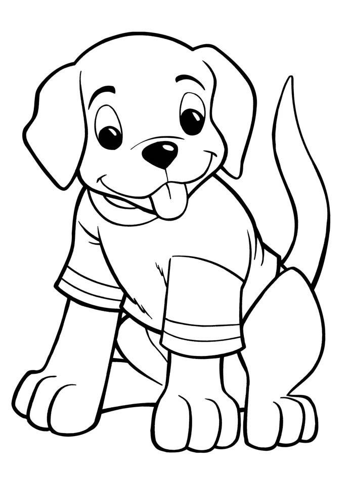 cachorro usando camiseta