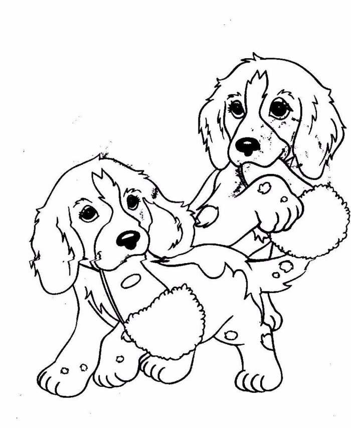 cachorros machucados